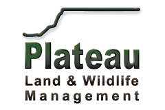Plateau Wildlife