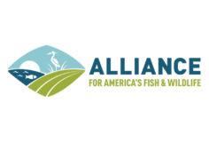 Alliance For Wildlife